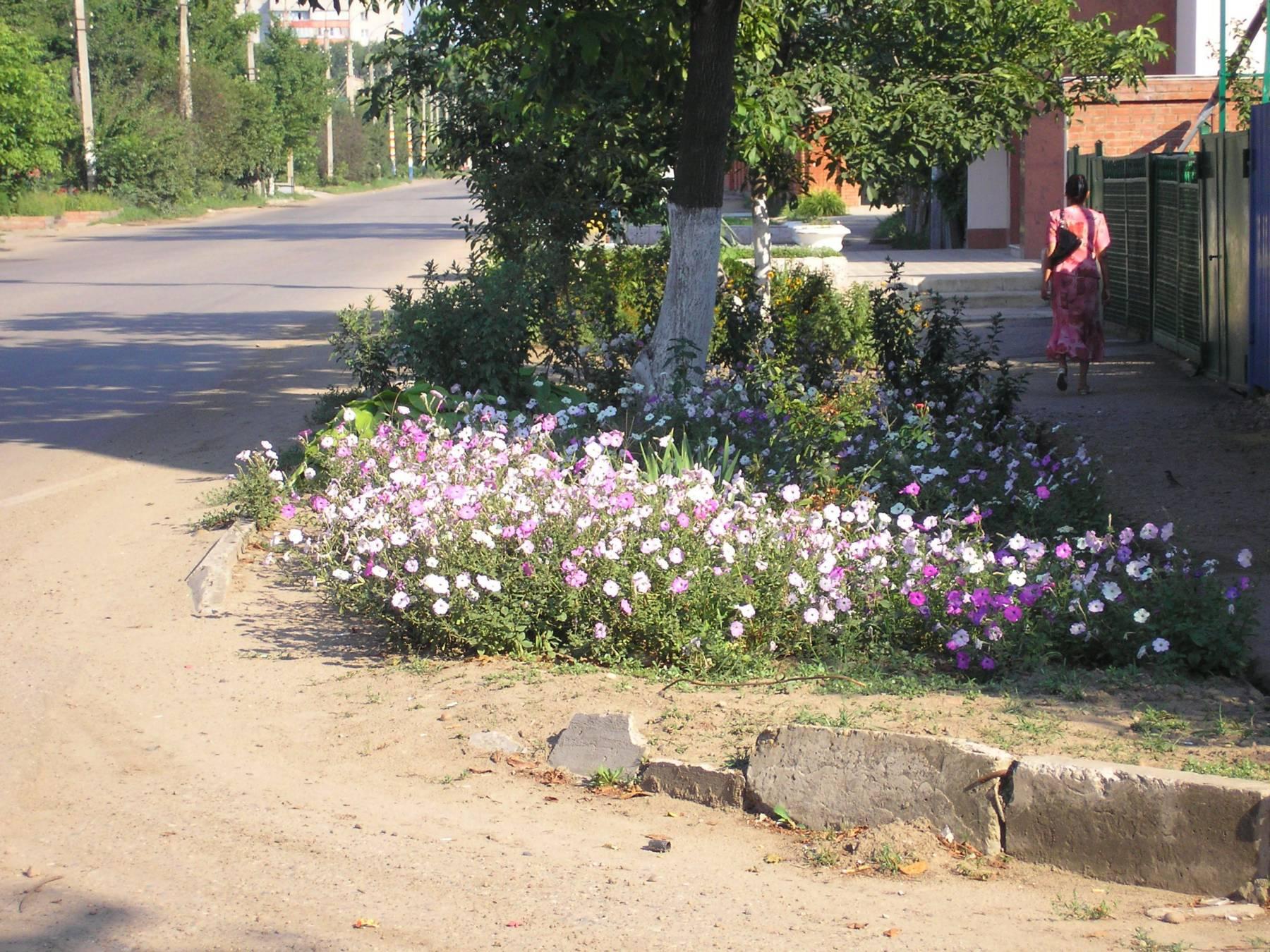 Фото цветов возле дома